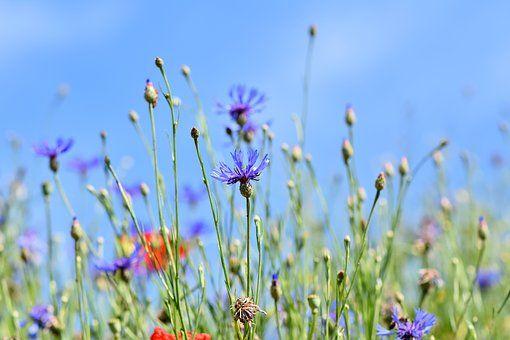 0624 Blumen