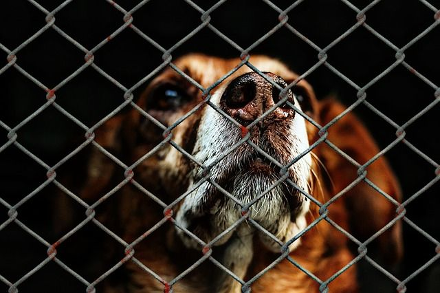 animal-welfare-1116203 640