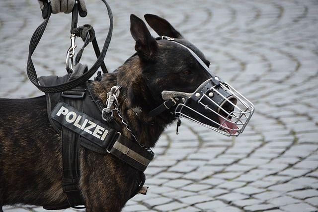 police-1321255 640
