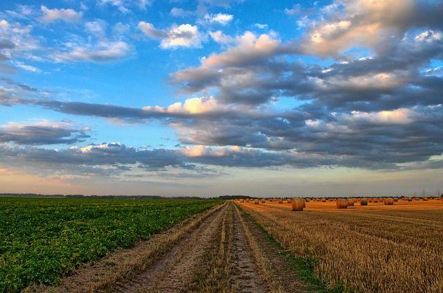 Landwirtschaft Symbolbild