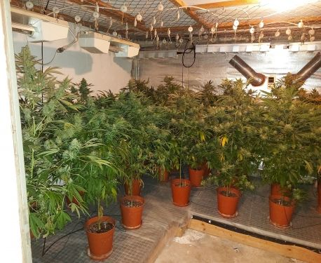 0403 Marihuanaplantage