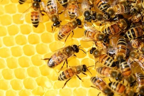 honey bees 326337 640