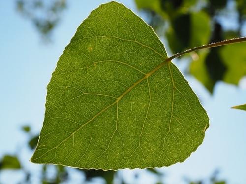 leaf 671661 640