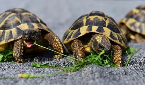 turtles 3613293 640