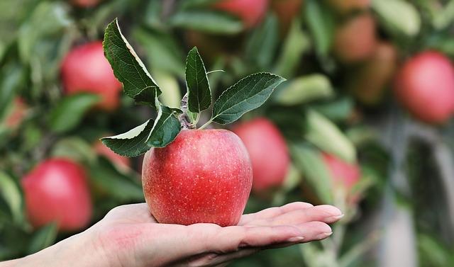 Apfel symbol