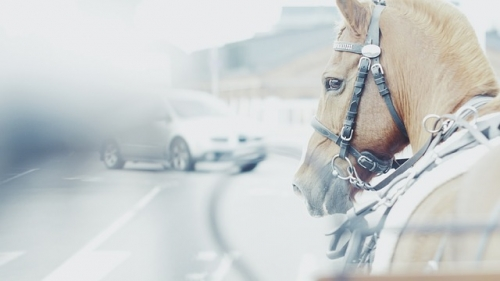 Auto Pferd