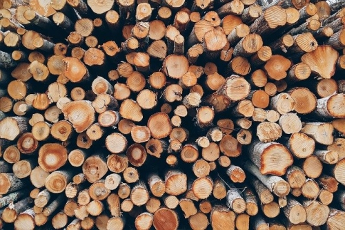 Baumstaemme Holz 1