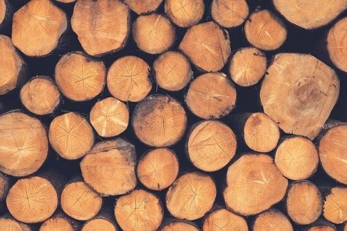 Baumstaemme Holz 3