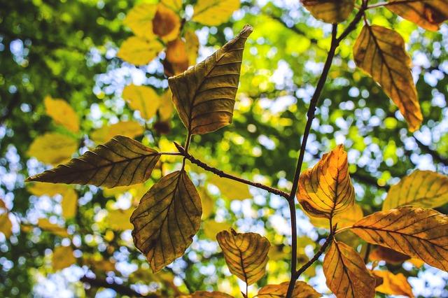 Blätter trocken