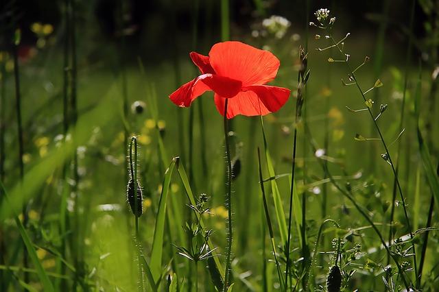 Blumen Symbol