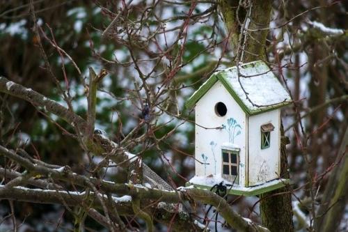 Dorf Vogel Haus