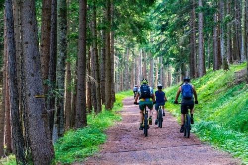 E Bike Fahrrad Wald