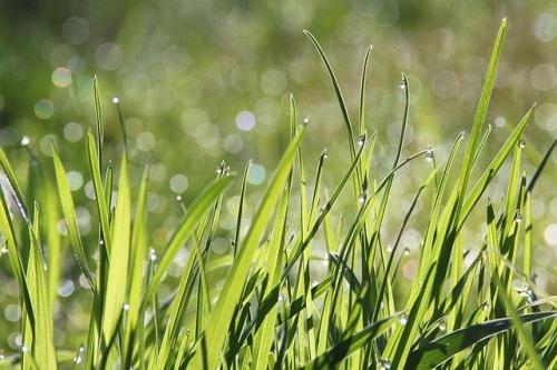 Gras Wiese Park