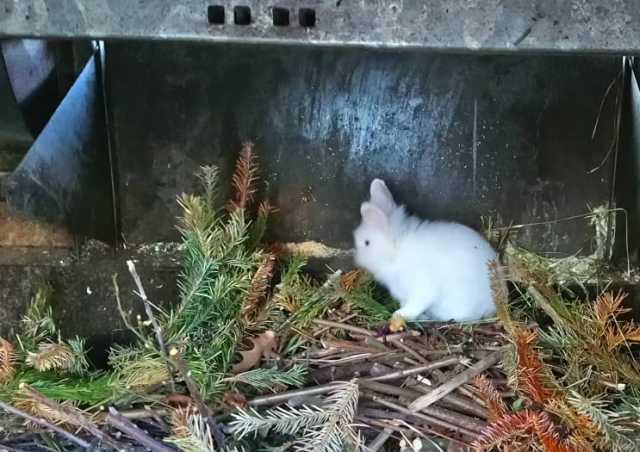 Kaninchen Biomüll