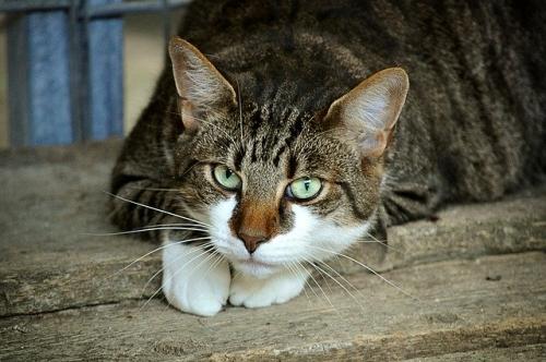 Katze Tierheim Symbol