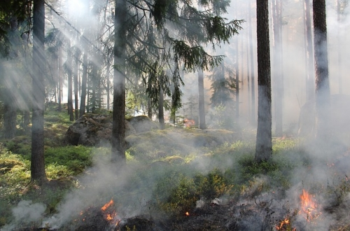 Waldbrand Symbol neu