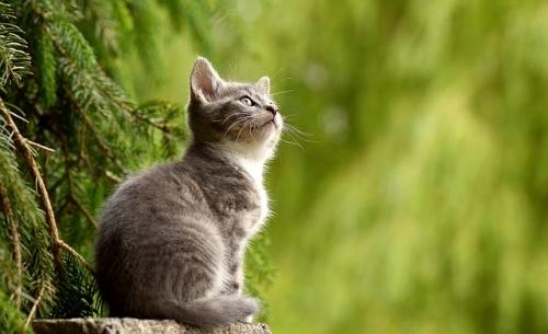 cat 2083492 640