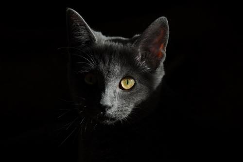 cat 778315 640