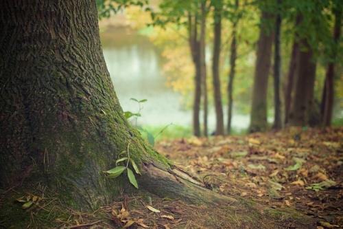 tree trunk 569275 640