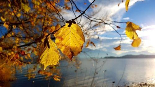 autumn 3812077 640