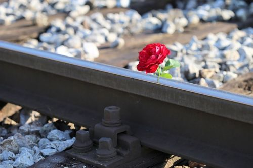 red-rose-on-railway-crossing-2781118 640