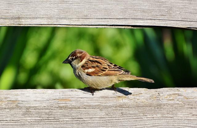 sparrow-3412876_640.jpg